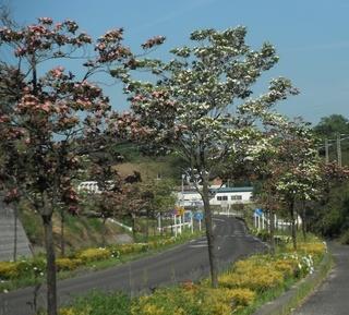 hanamizuki3.jpg